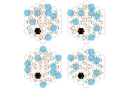 honeycomb shape with arrows shows the pattern of activity of rats in the maze