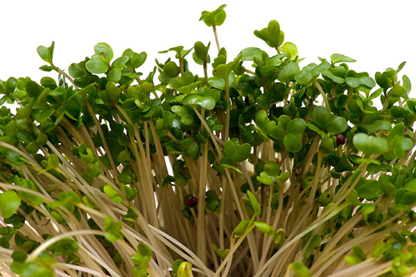 Chemical In Broccoli Sprouts May Treat >> Trial Sprouts Doubts About Broccoli Extract For Autism