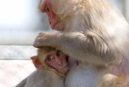 20141104qaparker-monkey