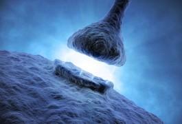 20141217toolboxsynapseproteome