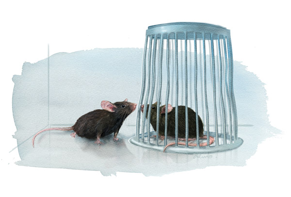 Mouse lab test: the three chambered assay