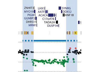 Study Pinpoints Autism Linked Protein >> Large Study Pinpoints New Genetic Risk Region For Autism Spectrum