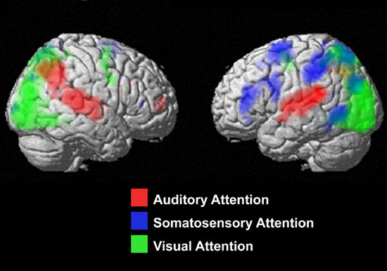 Cognition And Behavior Attention >> Cognition And Behavior Brain Maps Direct Our Attention Spectrum
