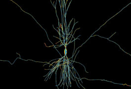 Artistic interpretation of a neuron in the hippocampus.