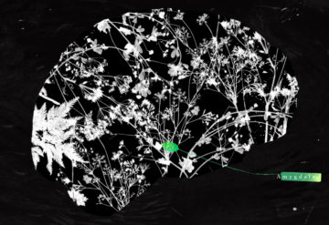 An illustration of the brain shows the amydala highlighted in green among botanical forms that look like neurons.