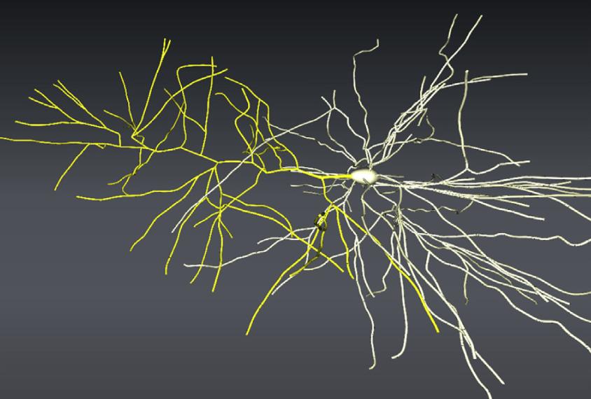 A large neuron