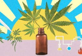 Collage illustration shows sun rising behind medicine dropper with marijuana leaves growing out of it.