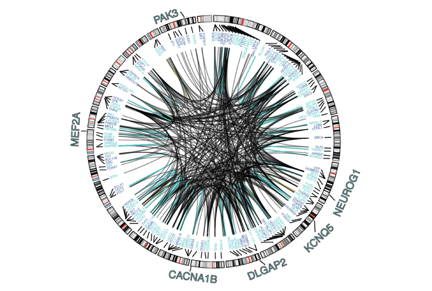 Autism Shares Brain Signature With >> Massive Analysis Refines Map Of Autism S Genetic Roots Spectrum