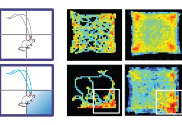 Optogenetic mice activity