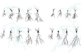 大鼠神经元