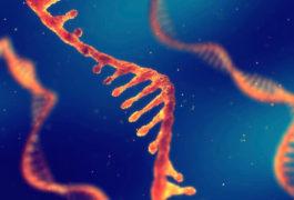 RNA molecules illustration