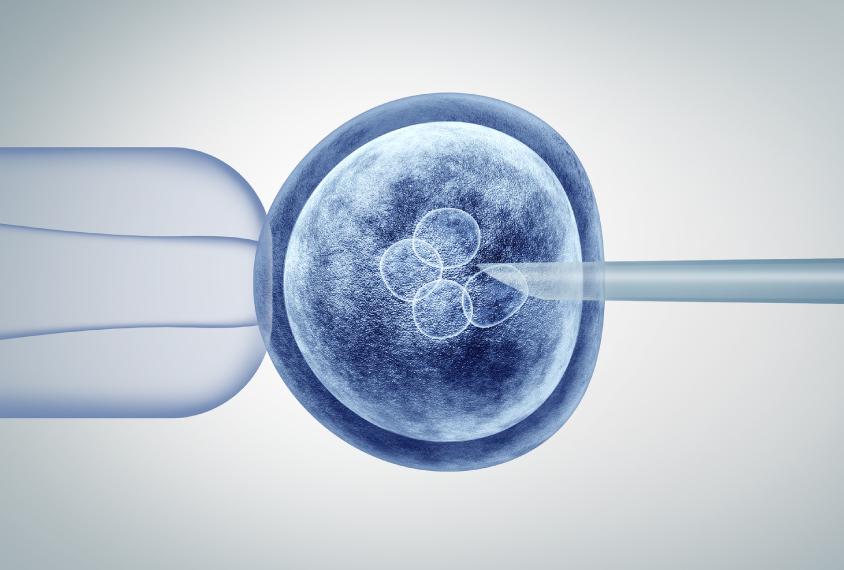Human embryo editing