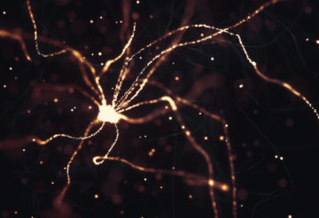 Neurons firing and lighting up