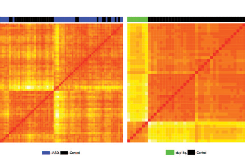Orange patterns are created from chemical tags in brain tissue from people with autism.