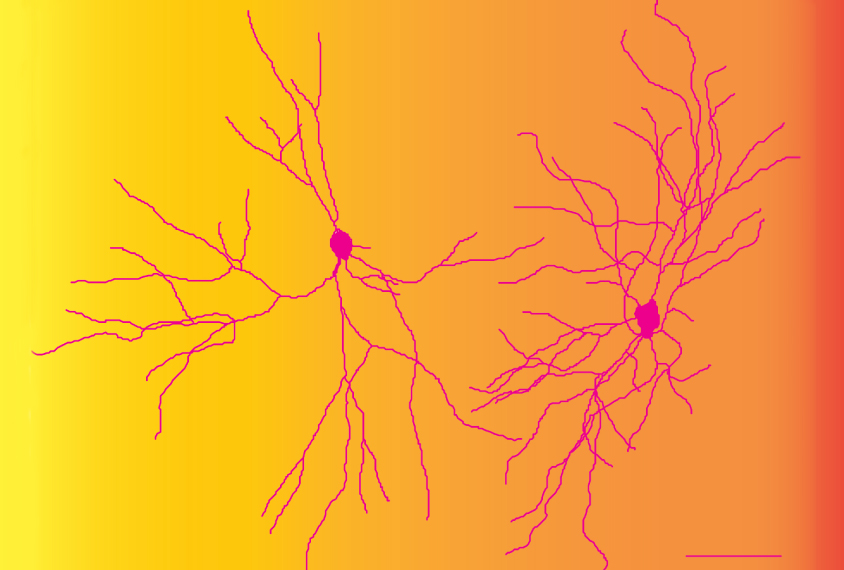 two neurons on yellow and orange background