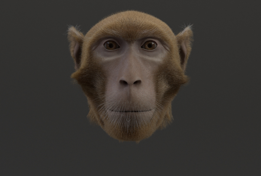 Monkey avatar face