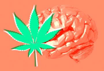 human brain and marijuana leaf