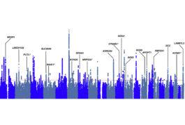 与多种病症相关的变体,包括自闭症,往往出现在影响大脑发育的基因中,如这张蓝色和灰色的图表所示。