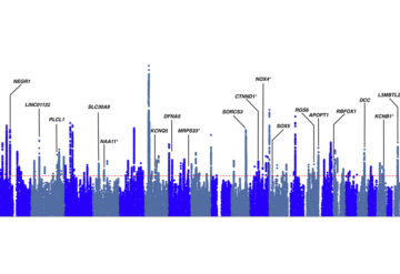 Variants linked to multiple conditions, including autism, tend to appear in genes that influence brain development, as shown in this chart in blue and grey.