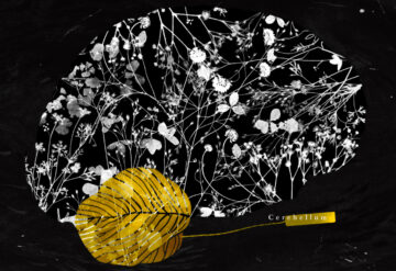 Illustration showing the human brain with neurons made out of flower shapes and the cerebellum highlighted in gold and yellow.