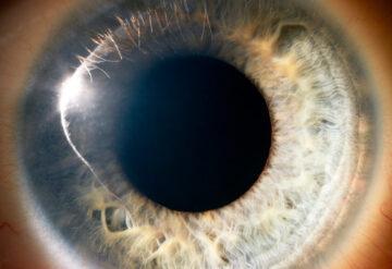 Human eye macro view
