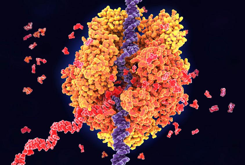 蛋白质结合到RNA,插图。