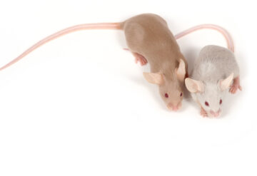 Two mice side-by-side.