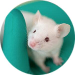 实验室鼠标