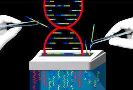 插图显示了研究人员的手选择部分DNA螺旋安全粉碎。