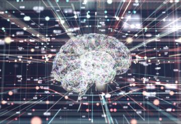人类的大脑在网络内的连接中变得活跃起来