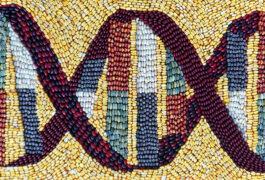 由不同颜色的玉米(玉米)仁描绘了DNA所制作的马赛克。