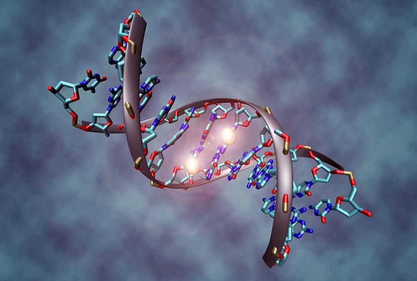 DNMT3A蛋白将甲基标签连接到DNA基础胞嘧啶上。