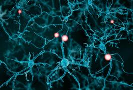 射击神经元的例证。