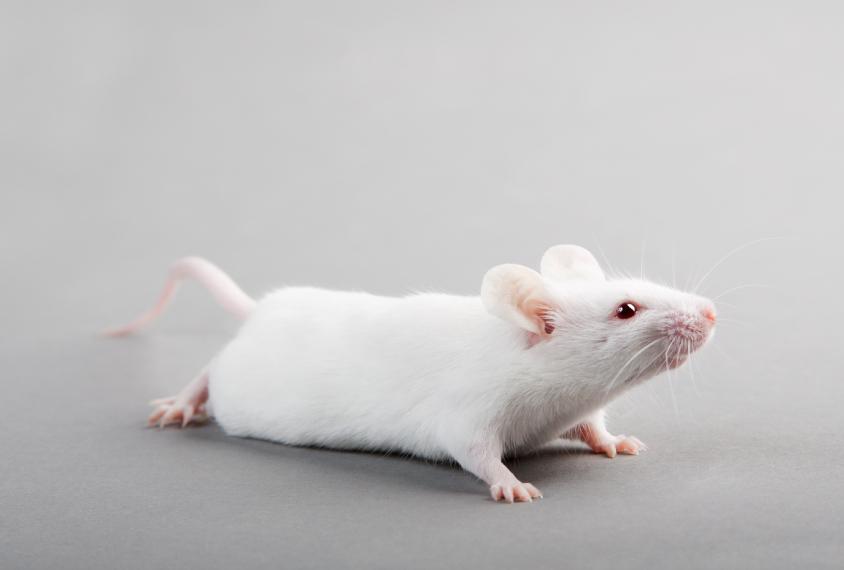 鼠标在灰色背景上看帧外的东西。