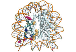 Molecular model of histone protein which wraps up DNA strands.