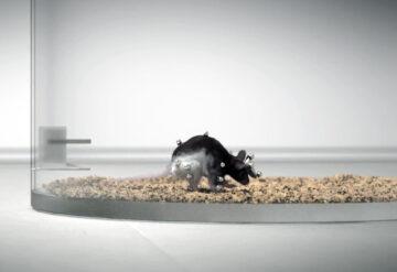 在一个透明的笼子里,一只装有运动传感器节点的老鼠的3D图像。