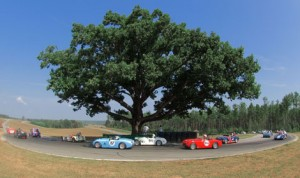 The iconic Oak Tree that has stood at the south end of Virginia Int'l Raceway for years has fallen. (VIR Photo)