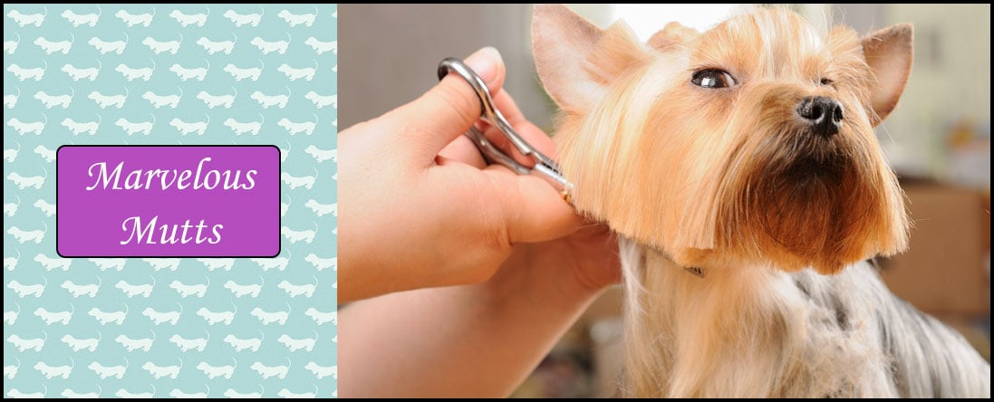 Pet Grooming & De-Shedding