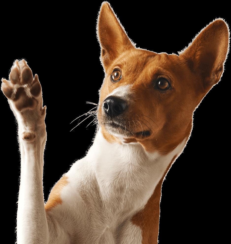 Monterey Bay Animal Dermatology | Pet Health, Wellness