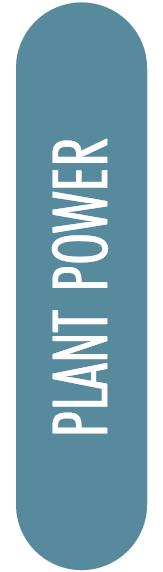 Plant Power Icon