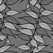 chinese pistache - grey