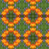 Tulips 6382