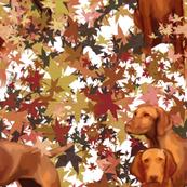 Vizslas and Autumn Leaves