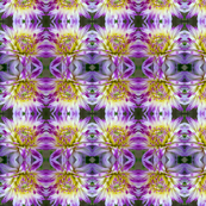 Purple Dahlias 9569