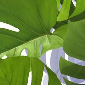 Jungle Leaves - Green Monstera Leaf Big Size
