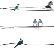 NZ Birds on a wire