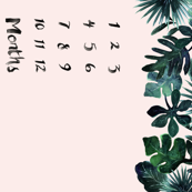 Tropical-Leaves-Blush_Months-42in
