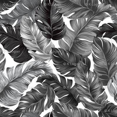 Black and White Tropical Leaves, Banana Leaves on White
