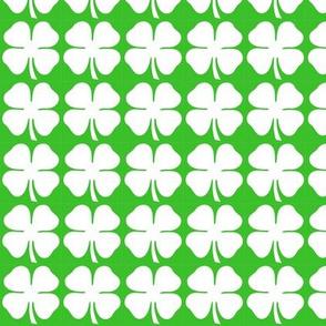 vit klöver/white clover