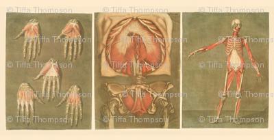 anatomy triptych